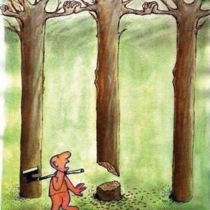 150430 bomen